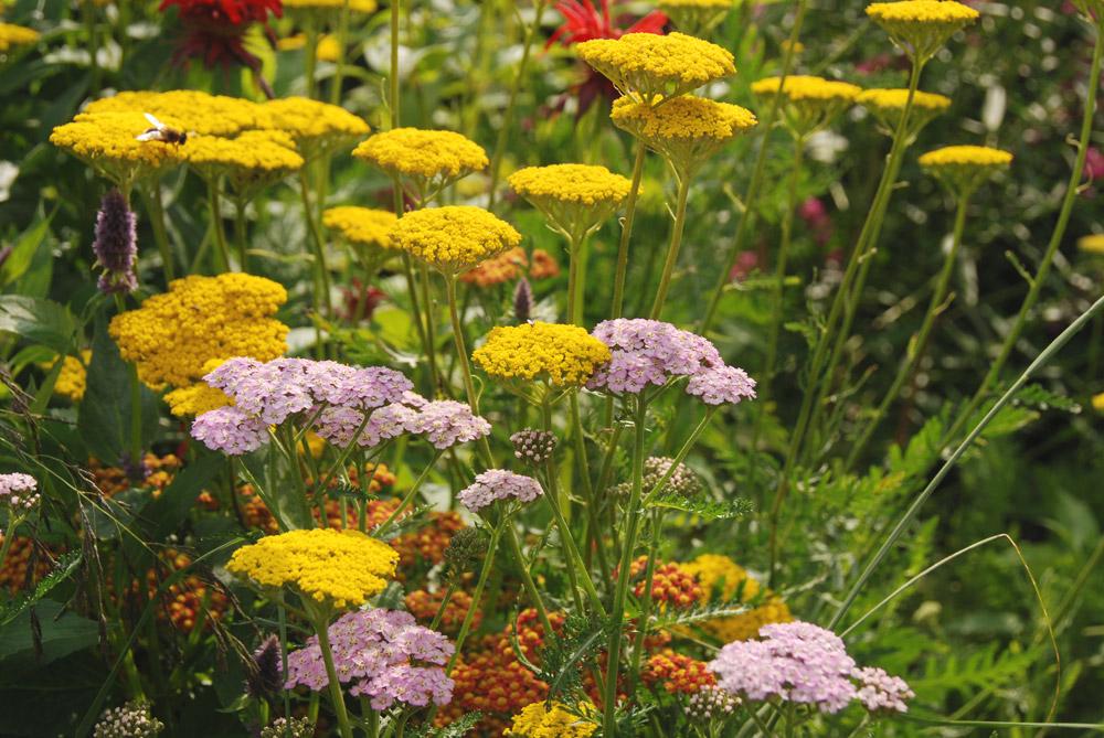 Tuin Der Lusten : Tuin der lusten u titel u de tuin in vier seizoenen